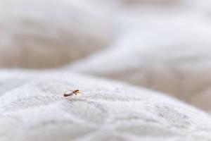Bed bug company in Regina