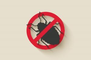bed-bug-removal-in-regina-killer-hear-regina