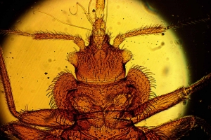 close up of a bed bug-killer heat bed bug removal